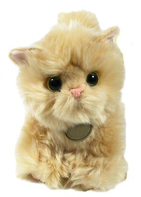 persian-kitty